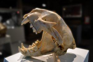 skull-937252_1920