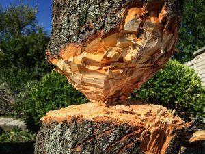 wood-1781737_1920