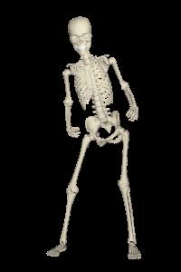 skeleton-1654869_1920